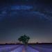 Voie Lactée à Valensole - Provence - France