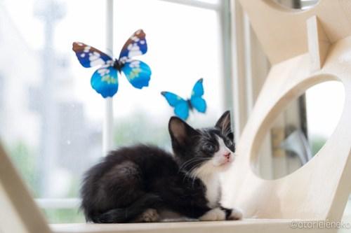 アトリエイエネコ Cat Photographer 42337333662_5e9615427a 1日1猫!高槻ねこのおうち まだまだいるよ子猫達! 1日1猫!  高槻ねこのおうち 里親様募集中 猫写真 猫カフェ 猫 子猫 大阪 初心者 写真 保護猫カフェ 保護猫 キジ猫 カメラ Kitten Cute cat