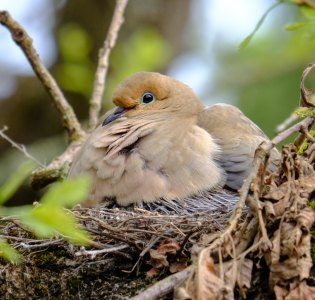 bird nest back yard