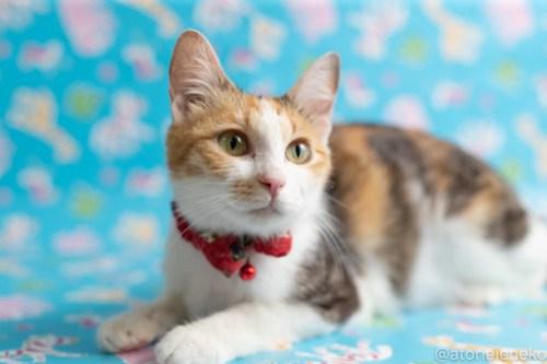 アトリエイエネコ Cat Photographer 42534352461_8655de10bb 1日1猫!保護猫カフェねこんチ子猫祭り(6/2)に行ってきた(その1)♪ 1日1猫!  里親様募集中 猫カフェ 猫 子猫 大阪 初心者 写真 保護猫カフェねこんチ 保護猫カフェ 保護猫 スマホ カメラ Kitten Cute cat