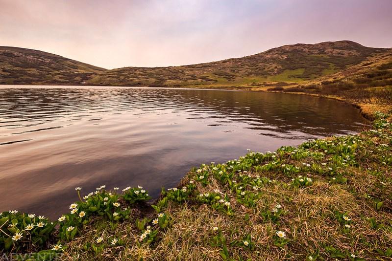 Verde Lake Wildflowers