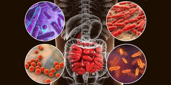 microbiome-âge-découverte-étude