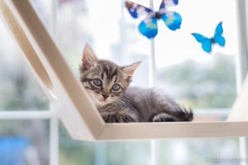 アトリエイエネコ Cat Photographer 42337340862_322a4fa231 1日1猫!高槻ねこのおうち まだまだいるよ子猫達! 1日1猫!  高槻ねこのおうち 里親様募集中 猫写真 猫カフェ 猫 子猫 大阪 初心者 写真 保護猫カフェ 保護猫 キジ猫 カメラ Kitten Cute cat