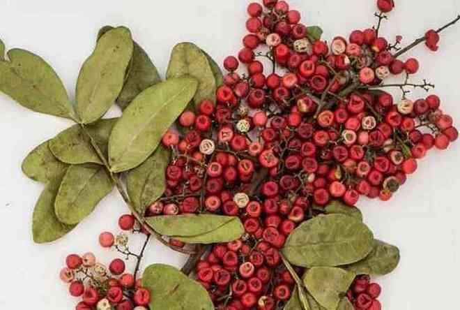 poivre-brésilien