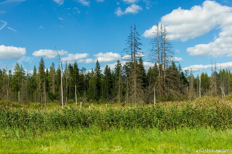 Тверские леса