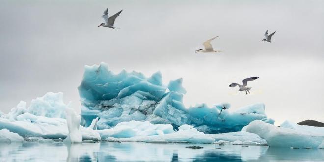 goélands-oiseaux-de-mer-indicateur