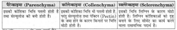 NCERT Solutions for Class 9 Science Chapter 6 (Hindi Medium) 3