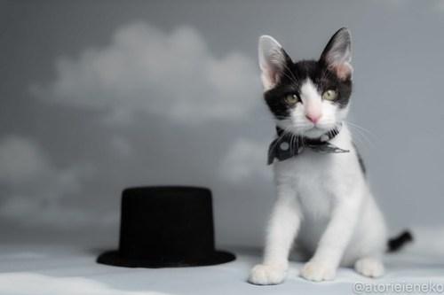 アトリエイエネコ Cat Photographer 43134376984_11732679dc 1日1猫!おおさかねこ俱楽部 里活中のマーチくんです♪ 1日1猫!  里親様募集中 猫写真 猫カフェ 猫 子猫 大阪 初心者 写真 保護猫カフェ 保護猫 ハチワレ ニャンとぴあ スマホ カメラ おおさかねこ倶楽部 Kitten Cute cat