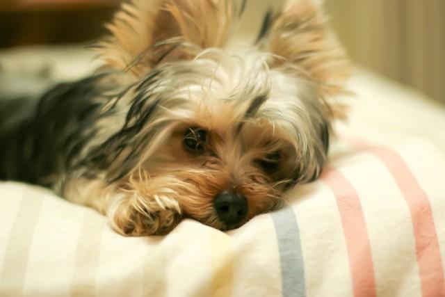 ニーズを満たしてもらったことで、うんちを食べなくなった犬