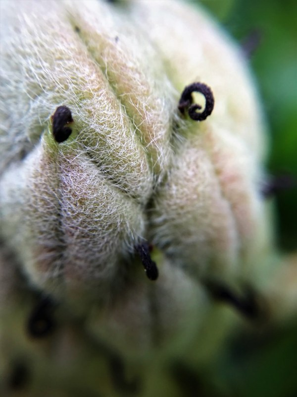 Week 29: Macro/Close Up - The Trevor Carpenter PhotoChallenge