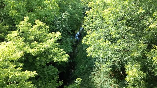 Panke-Dschungel