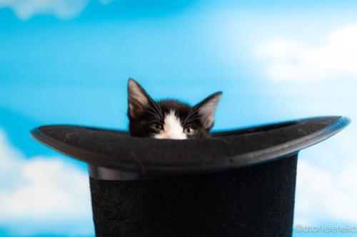 アトリエイエネコ Cat Photographer 42843435651_494811a401 1日1猫!おおさかねこ俱楽部 里親様募集中のアトムくん♪ 1日1猫!  里親様募集中 猫写真 猫カフェ 猫 子猫 大阪 初心者 写真 保護猫カフェ ハチワレ ニャンとぴあ カメラ おおさかねこ倶楽部 Kitten Cute cat