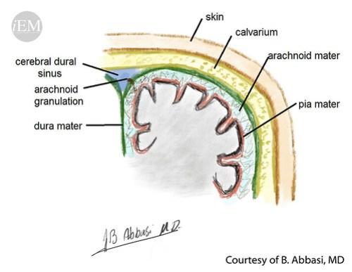 627.13 - Figure 13 - Schematic representation of meningeal layers
