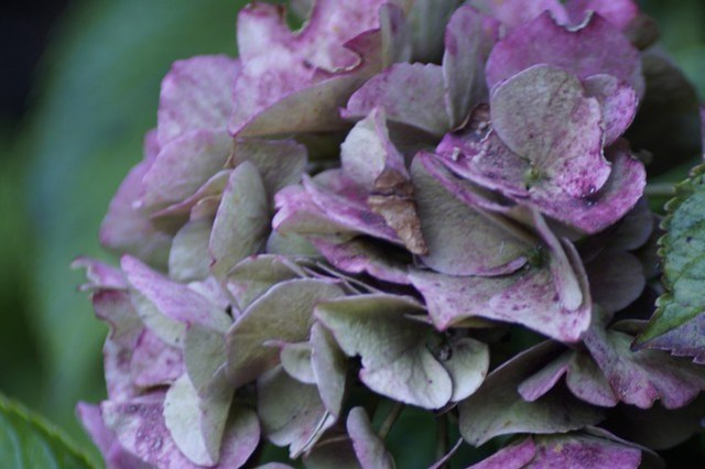 Bloemen in de tuin,september 014.JPGovf