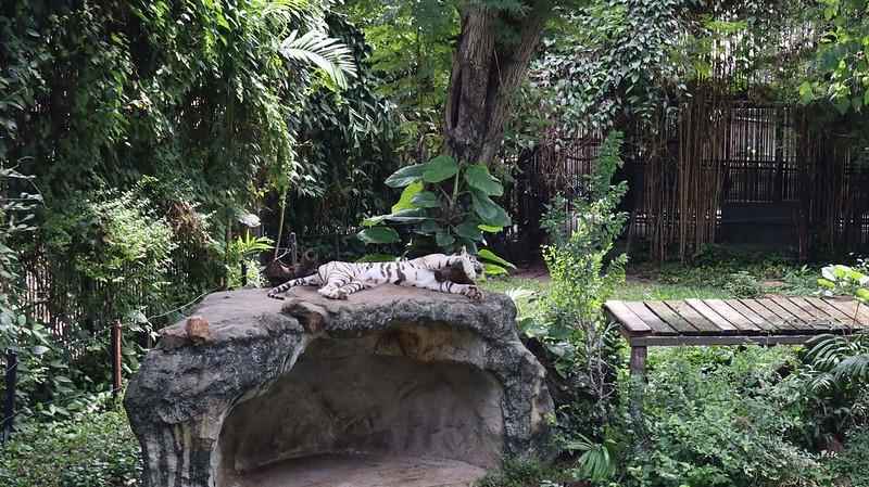 สวนสัตว์ดุสิต สวนสัตว์เขาดิน 2561 (2)
