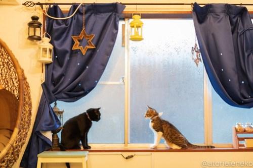 アトリエイエネコ Cat Photographer 43855068351_4e0dae64b1 1日1猫!保護猫カフェウリエルへ行ってきた(2/2)♪ 1日1猫!  里親様募集中 猫写真 猫カフェ 猫 子猫 大阪 初心者 写真 保護猫カフェウリエル 保護猫カフェ 保護猫 中崎町 スマホ カメラ ウリエル Kitten Cute cat