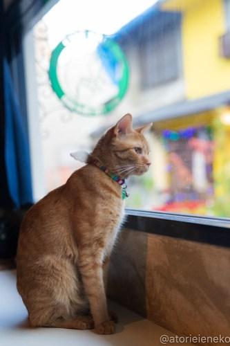 アトリエイエネコ Cat Photographer 43855013151_d03a741eb3 1日1猫!保護猫カフェウリエルへ行ってきた(1/2)♪ 1日1猫!  里親様募集中 猫写真 猫カフェ 猫 大阪 初心者 写真 保護猫カフェウリエル 保護猫カフェ 保護猫 中崎町 スマホ カメラ ウリエル Kitten Cute cat