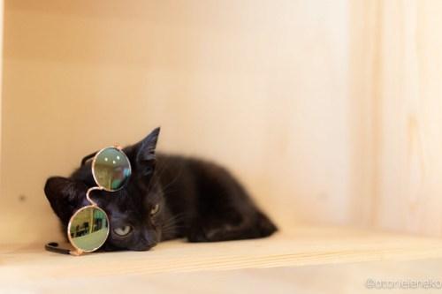 アトリエイエネコ Cat Photographer 43117412031_294c3fd753 1日1猫!おおさかねこ俱楽部 里親様募集中 魔法使いのバジルちゃん♪ 1日1猫!  黒猫 里親様募集中 猫写真 猫カフェ 猫 子猫 大阪 初心者 写真 保護猫カフェ 保護猫 ニャンとぴあ スマホ キジ猫 カメラ おおさかねこ倶楽部 Kitten Cute cat