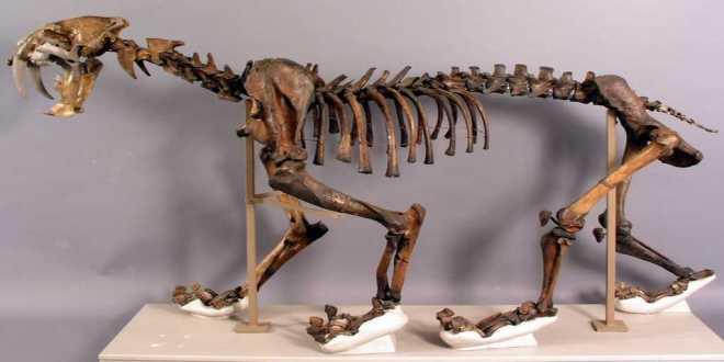spcécimens-squelettes-histoire-naturelle