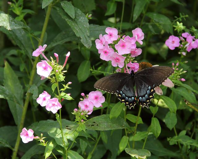2018-08-05_Botanic_Garden_055