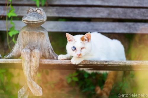 アトリエイエネコ Cat Photographer 43088438355_a1c079579e 1日1猫! 8/12しっぽ天使&高槻ねこのおうち(第三回 猫・雑貨店&里親探し) 1日1猫!  高槻ねこのおうち 里親様募集中 譲渡会 猫写真 猫カフェ 猫 子猫 大阪 写真 保護猫 しっぽ天使 Kitten Cute cat 24節記