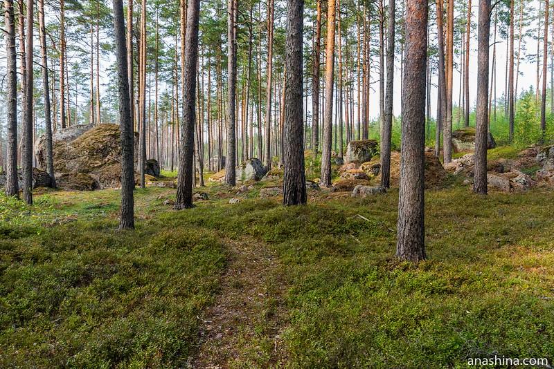 Валуны в лесу, Карельский перешеек
