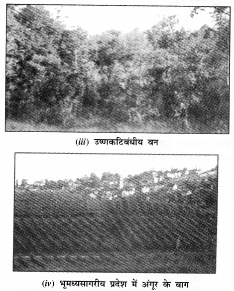 NCERT Solutions for Class 7 Social Science Geography Chapter 6 (Hindi Medium) 5