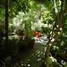 A Glimpse of Garden