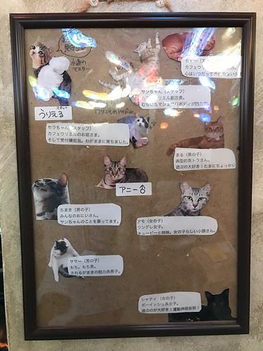 アトリエイエネコ Cat Photographer 42046492790_71c76902b0 1日1猫!保護猫カフェウリエルへ行ってきた(1/2)♪ 1日1猫!  里親様募集中 猫写真 猫カフェ 猫 大阪 初心者 写真 保護猫カフェウリエル 保護猫カフェ 保護猫 中崎町 スマホ カメラ ウリエル Kitten Cute cat