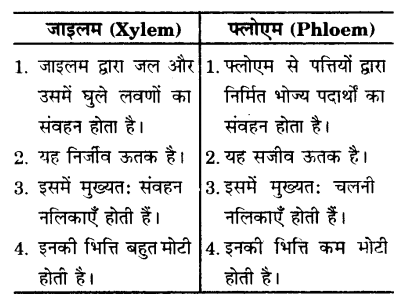 UP Board Solutions for Class 9 Science Chapter 6 Tissues s 8