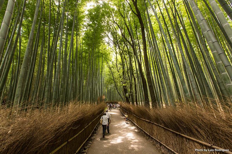 Qué Ver Y Hacer En Arashiyama Al Oeste De Kioto Japonismo