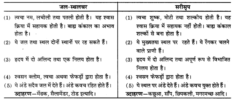 UP Board Solutions for Class 9 Science Chapter 7 Diversity in Living Organisms 105 3