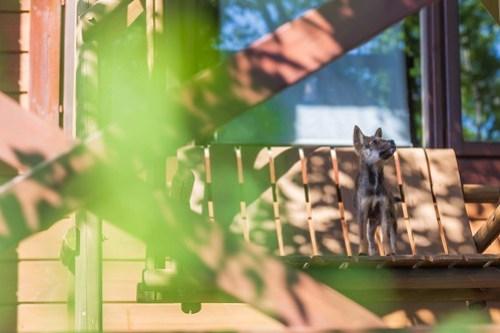 アトリエイエネコ Cat Photographer 29364435857_1840ab6409 1日1猫!ねこといぬのおうちさがし@和泉市今岡動物病院(8/26)に行ってきた♪2/2 1日1猫!  里親様募集中 猫写真 猫カフェ 猫 子猫 大阪 和泉ねころじの会 初心者 写真 保護猫 保護犬 カメラ この子のあした Kitten dog Cute cat