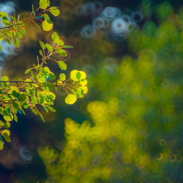 Monet Tree
