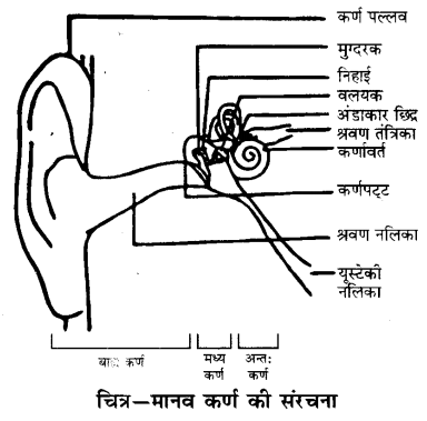 UP Board Solutions for Class 9 Science Chapter 12 Sound l 5