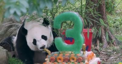 Happy 3rd birthday Bei Bei