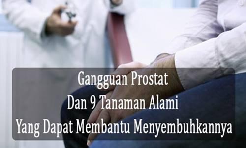 Tanaman Alami Untuk Mengobati Gangguan Prostat