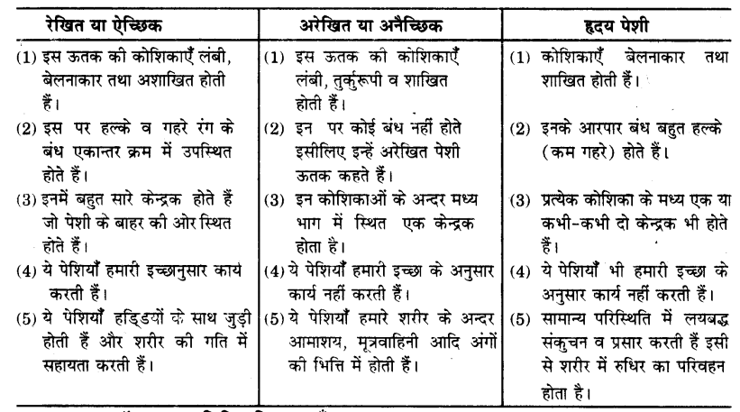 UP Board Solutions for Class 9 Science Chapter 6 Tissues 89 8