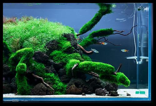 Green Aqua Showroom Budapest