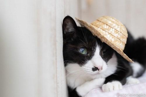 アトリエイエネコ Cat Photographer 42344553930_3bd9255ae4 1日1猫!しっぽ天使さんの「猫舎」に行ってきた 1/2♪ 1日1猫!  高槻 里親様募集中 猫写真 猫カフェ 猫 子猫 大阪 初心者 写真 保護猫 キジ猫 カメラ しっぽ天使 Kitten Cute cat