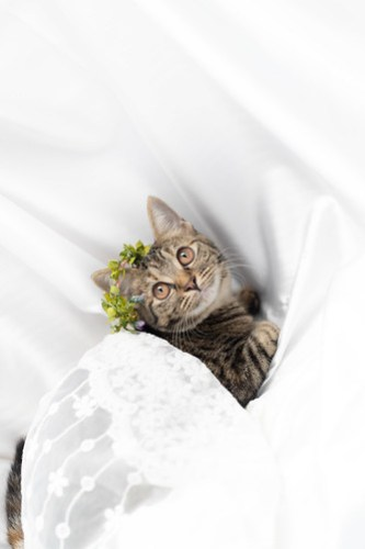 アトリエイエネコ Cat Photographer 29342687067_7dc083d5d5 1日1猫!ねこといぬのおうちさがし@和泉市今岡動物病院(8/26)に行ってきた♪1/2 1日1猫!  里親様募集中 猫写真 猫カフェ 猫 子猫 大阪 和泉ねころじの会 初心者 写真 保護猫 保護犬 ニャンとぴあ スマホ キジ猫 カメラ この子のあした Kitten dog Cute cat