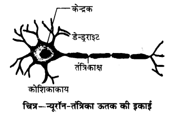 UP Board Solutions for Class 9 Science Chapter 6 Tissues 87 2
