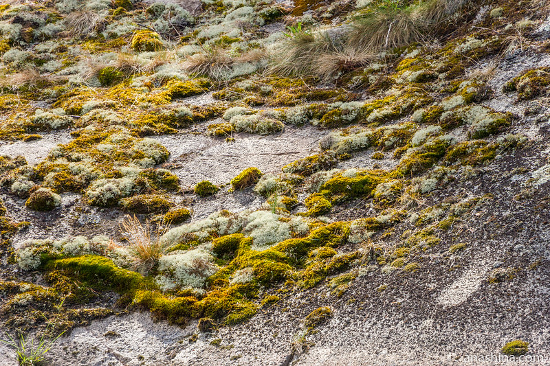 Мхи и лишайники на скале