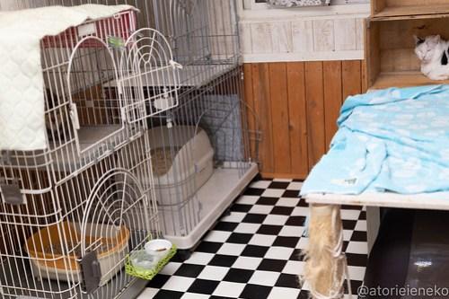 アトリエイエネコ Cat Photographer 44104641432_2880c85bee 1日1猫!しっぽ天使さんの「猫舎」に行ってきた 1/2♪ 1日1猫!  高槻 里親様募集中 猫写真 猫カフェ 猫 子猫 大阪 初心者 写真 保護猫 キジ猫 カメラ しっぽ天使 Kitten Cute cat