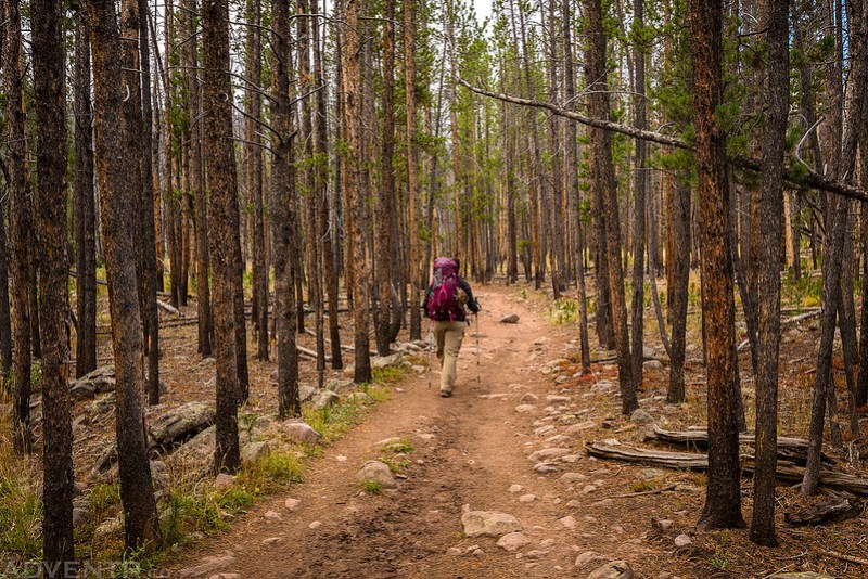 Backpacking Through The Trees