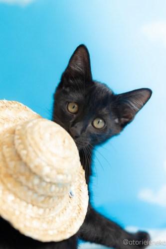アトリエイエネコ Cat Photographer 44423505421_55eb6b26b1 1日1猫!なら地域ねこの会さんの猫撮影会♪ 1日1猫!  猫写真 猫カフェ 猫 子猫 奈良 大阪 初心者 写真 保護猫カフェ 保護猫 ハチワレ ニャンとぴあ スマホ キジ猫 カメラ なら地域ねこの会 Kitten Cute cat