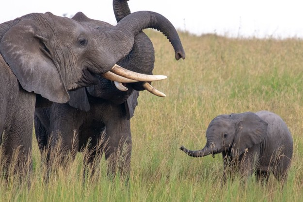 Baby elephants are the cutest