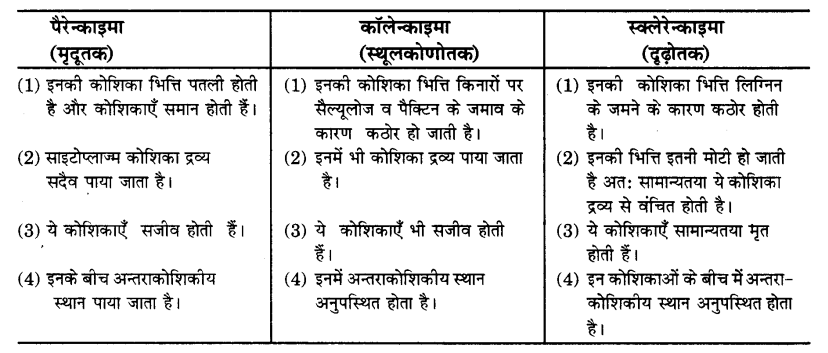 UP Board Solutions for Class 9 Science Chapter 6 Tissues 89 4
