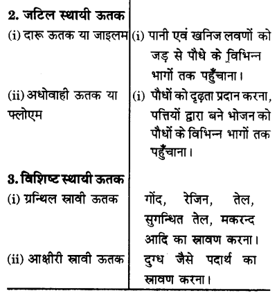 UP Board Solutions for Class 9 Science Chapter 6 Tissues l 1.2