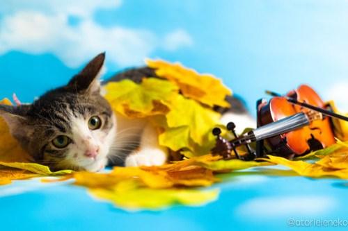 アトリエイエネコ Cat Photographer 44643267352_2f321c1508 1日1猫!おおさかねこ倶楽部  Let's music !! by Paco♪ 1日1猫!  里親様募集中 茶トラ 猫写真 猫カフェ 猫 子猫 大阪 初心者 写真 保護猫カフェ 保護猫 ハチワレ ニャンとぴあ スマホ キジ猫 カメラ おおさかねこ倶楽部 Kitten Cute cat